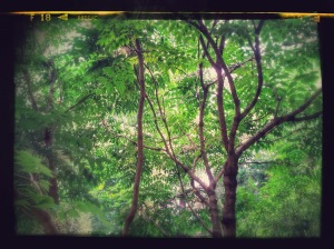20140822_140651-EFFECTS