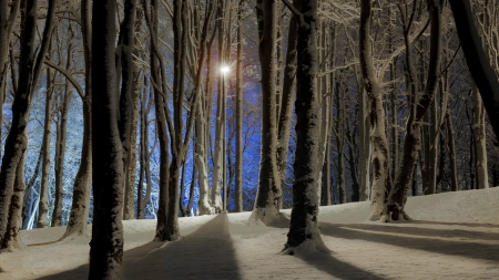 fantastic winter forest shadows at night