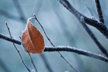 frozen-live